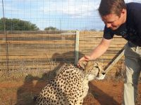 Cheetah Experience - South Africa - 2016
